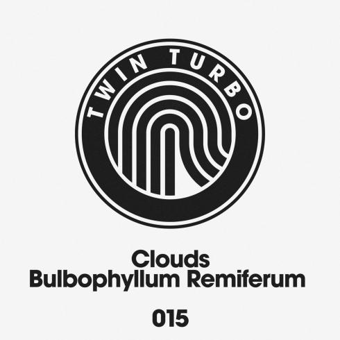 Clouds - Bulbophyllum Remiferum
